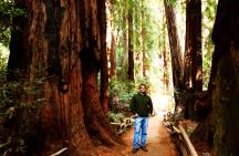 Muir Woods,California