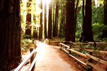 Trail, Muir Woods, California