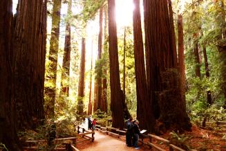 Trail,Muir Woods,California