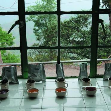 Tea Tasting Session