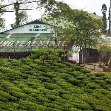 Gin Tea House Darjeeling