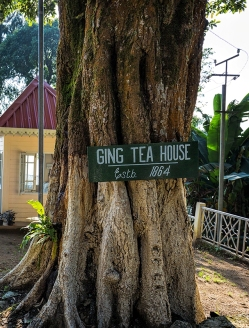 Ging Tea House Darjeeling