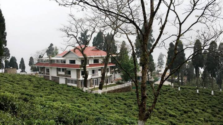 Sourenee Tea Estate, Mirik, Darjeeling