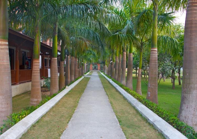 Palm Walkway